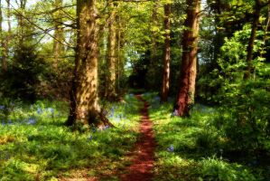 Into Bluebell woods by chew1232