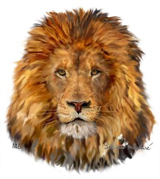 Lion by NLS61