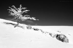 ...winter tree -1-... by OlegBreslavtsev