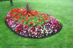Plant bed one by KarlsSkies