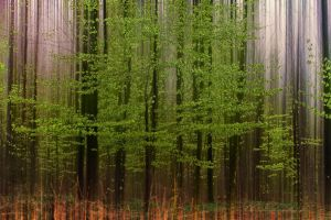 Forest3 Orne France by hubert61