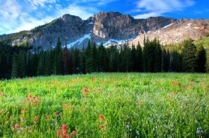 Albion Basin Wildflowers by mikewheels