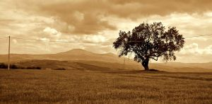 Alone tree.. Sepia Effect by nuvole90