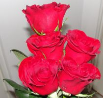 Red Roses by SDolha