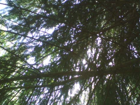 Underview of a pine tree by SleekRiverCat88