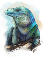 Blue Iguana by charfade