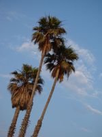 Palm Trees by kanne13