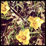 Insta 2014 - Spring flowers. 5 by Jessi-element
