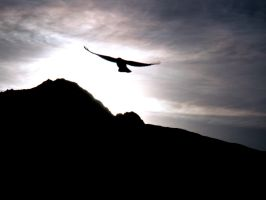 as the crow flies by hres
