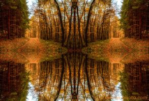 totally mirrored by brijome