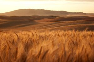 Palouse Sunset 10 by krovakny