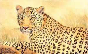 Leopard by donnaquinn