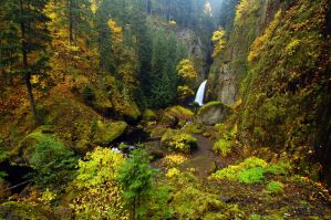 Wahclella Falls, Autumn Study by greglief