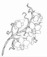 rough orchid tattoo design by Lelio-Rising