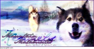Mountain Malmutes Banner by MudBug93