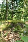 Mossy log Stock 06 by Malleni-Stock