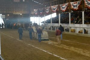 Horse Weight Pulling Competition 12 by Miss-Tbones