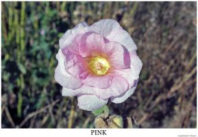 Pink by hunter1828