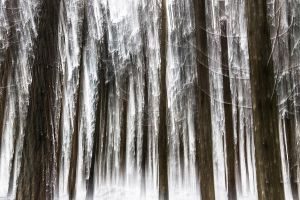 Blurred Forest by cwaddell