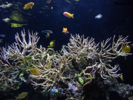Underwater paradise by Rosshi