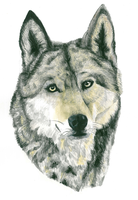 Wolf Painting by Dragonite1