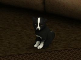 Border Collie Pup Sims 3 Pets by huntinlabs