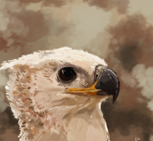Crowned eagle by InkpotBot