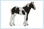 Blue X Effie foal auction - CLOSED by ForeignFrontierRanch