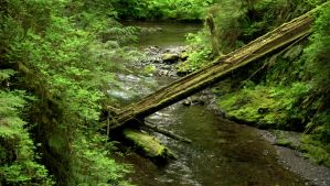 Quinault Rain Forest, Olympic Peninsula, Wa. by PamplemousseCeil