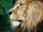 The King by Jaavii