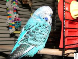 Shh dont wake the Budgie by The-Dude-L-Bug