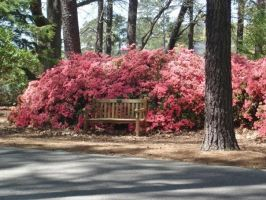 Lone Bench with Azaleas by House-Mystic