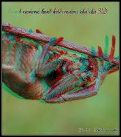 Spider 3D anaglyph with only 1 camera by zippy6234