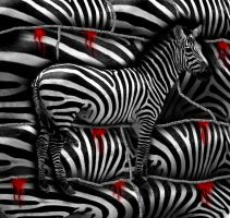 Zebra Stripes by BigA-nt