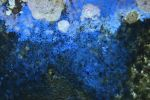Texture 115 by Malleni-Stock