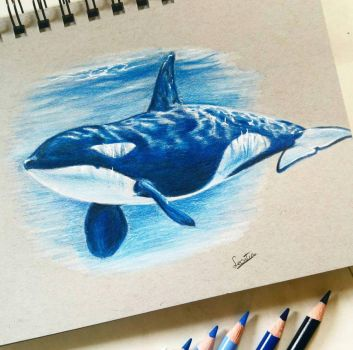 orca by Tinesdierportretten