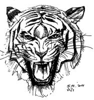 angry tiger by franchity