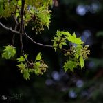 Newborn leaves by ildiko-neer