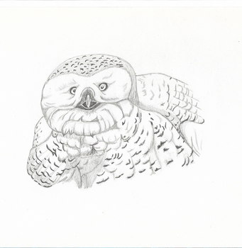 Une chouette / An owl by lebookdecezary