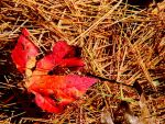 Fall is in the air VI.... by TriciaStucenski