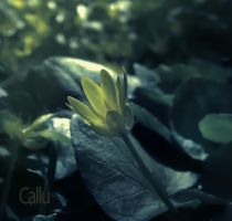 Hidden Reshaded by Callu