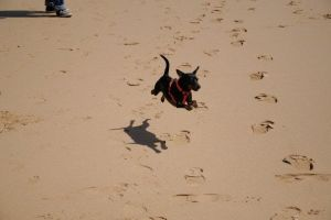 Hover dog by the-sooz