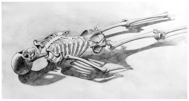 Study drawing | Skeleton by Vertigo-one