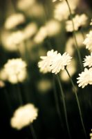 Everlasting 03 by alvse