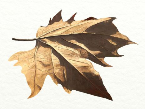 Leaf drawing by Xuanah