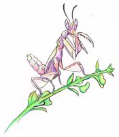 Orchid Mantis by Duckweed