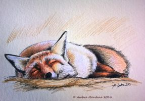Sleeping fox by flysch