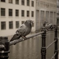 Oslo Bird by Ardisrawr