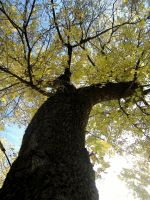 Nature_ Tree 01 by Aimelle-Stock