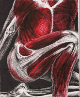 muscle drawing- leg and chest by aspiring-x